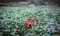 Tour du lịch tham quan nhà vườn và trải nghiệm làm nông ở Đà Lạt