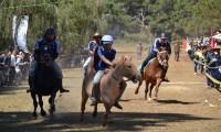 Tung vó ngựa đua trong Ngày Tình yêu